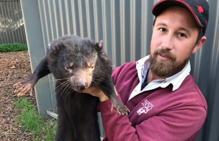 Tasmanian devils, Simon Dower, Monarto Safari Park