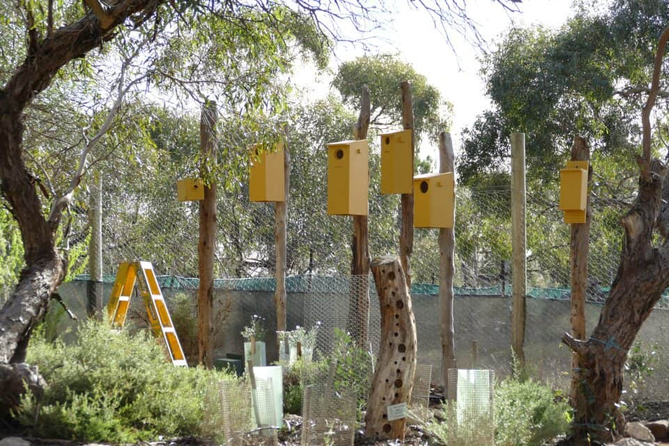 Monarto Zoo Native Habitat Garden bird box