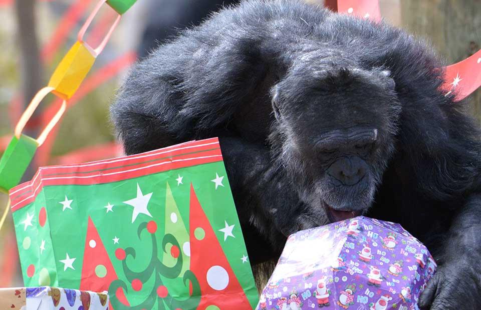 Merry Christmas from Monarto Safari Park