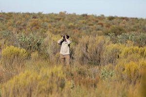 Mallee Emu-wren translocations