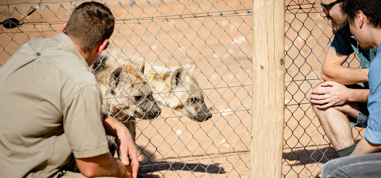 Man watching Spotted Hyena through mesh during Lions at Bedtime experience
