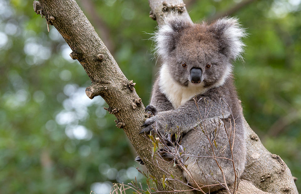 Monarto Safari Park bushfire Wildlife Conservation Fund