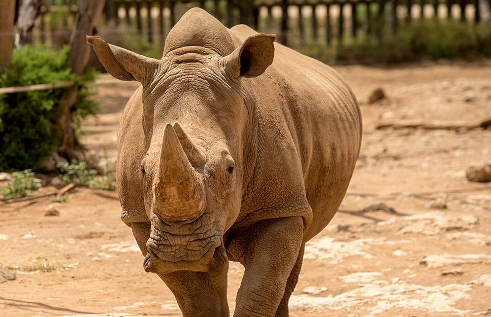 Monarto Safari Park reopening COVID-19