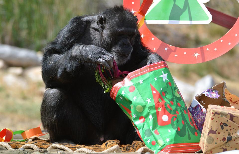 Monarto Safari Park Christmas gift guide