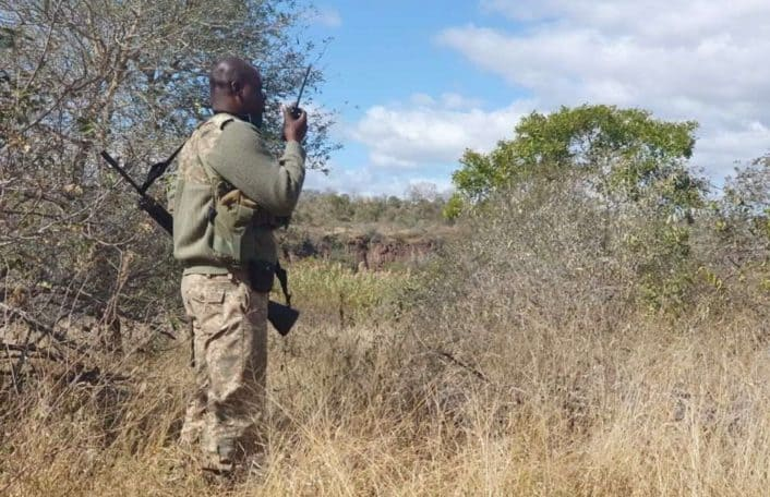 Kruger National Park ranger stands in scrub area using radio to communicate with other rangers.