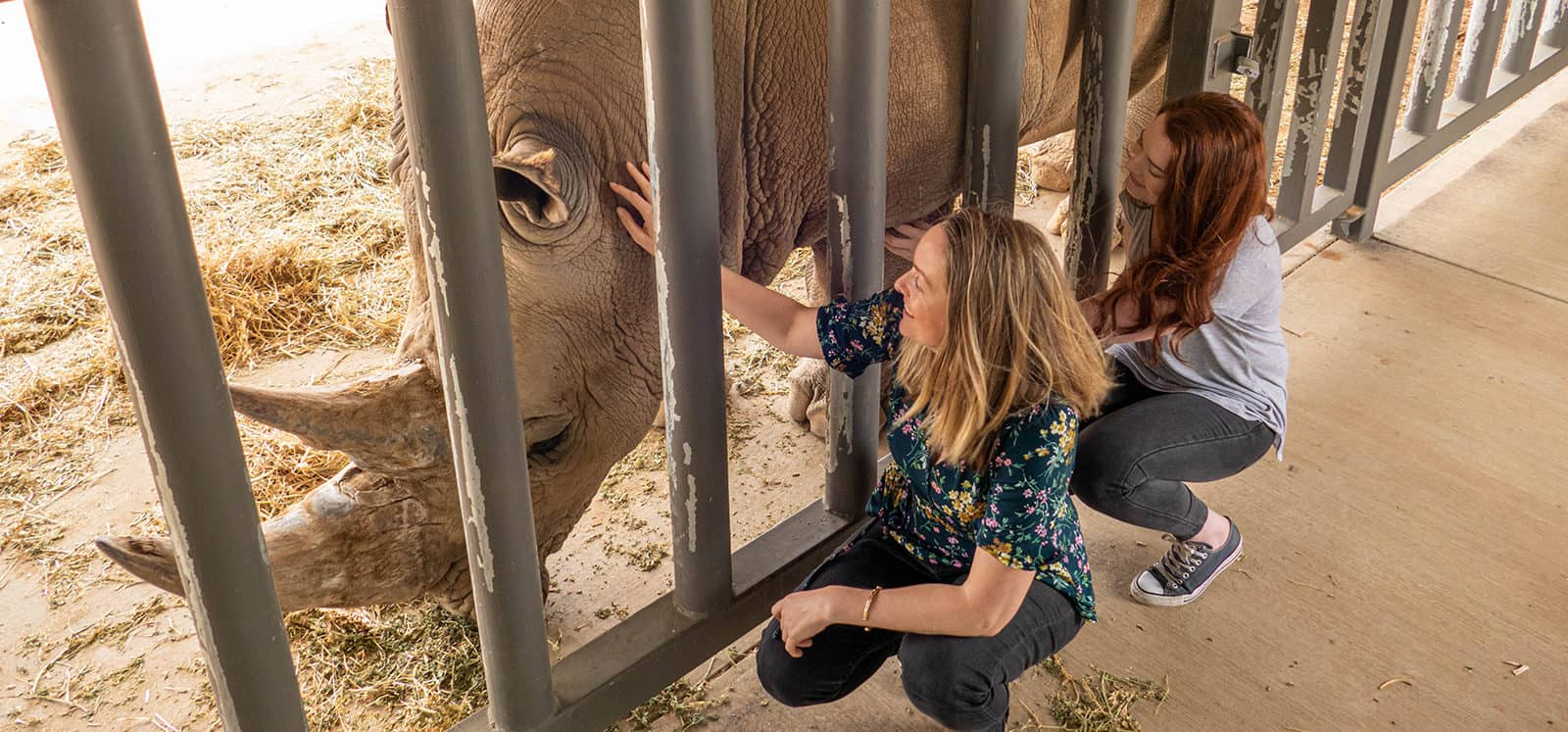 Women touching Southern White Rhino during Rhino Express experience